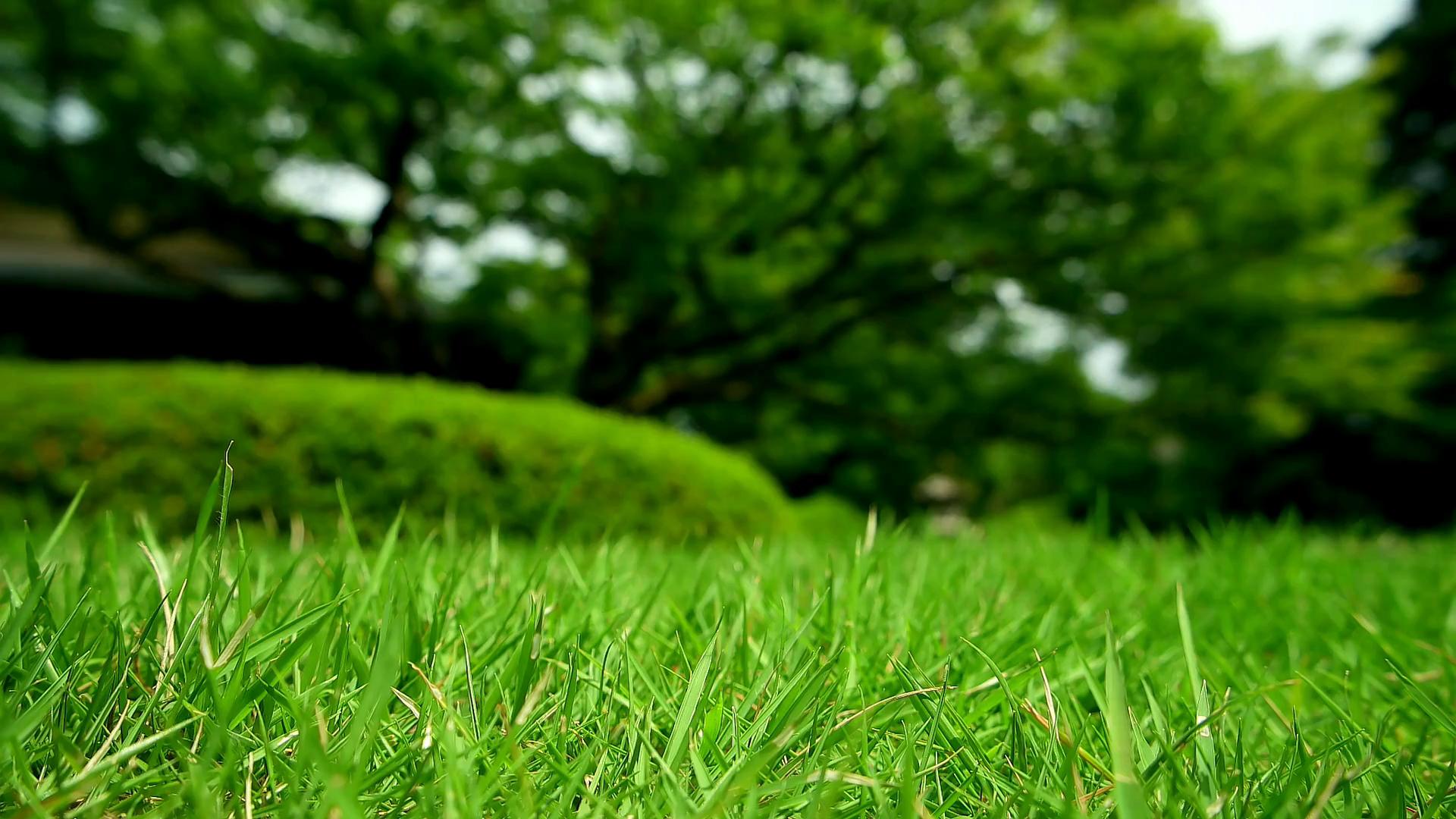 Rozkopávky zelene